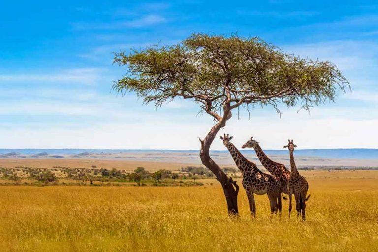 Сафари в Африка – 55 Долара на ден